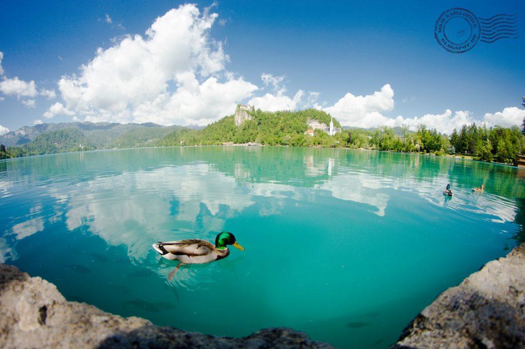 Lake Bled - Moje Razglednice