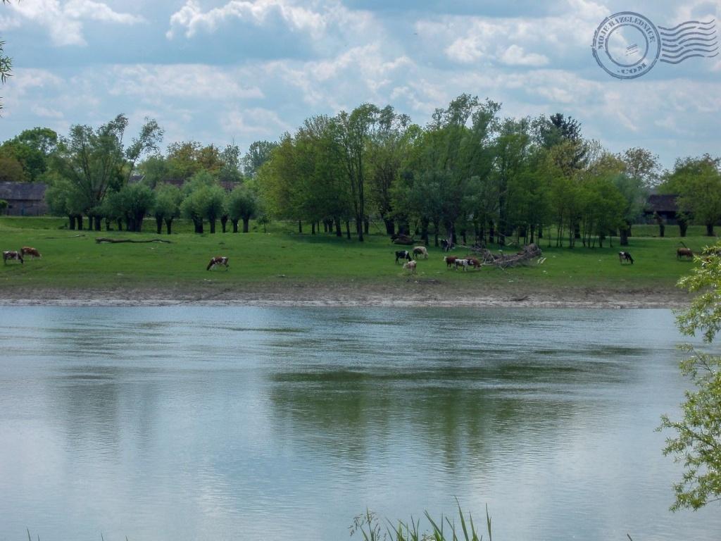Park prirode Lonjsko polje prostire se na površini od 506,50 km2 i nalazi se između Save i Moslavačke gore, mali dio uz rijeku Lonju. Ova zaštićena poplavna područja specifična je za bogatstvo biljnog i životinjskog svijeta. Neki turisti promatraju samo ptice, jer je zabilježeno 250 vrsta ptica. Dnevna karta za park je 35 kn.Ulazak u poplavno područje nije dozvoljen motornim vozilima. Uvijek se treba kretati obilježenim pješačkim stazama i biciklističkim rutama.U park je moguće doći sa više strana. Ne zaboravite, dolazite u močvarno područje.